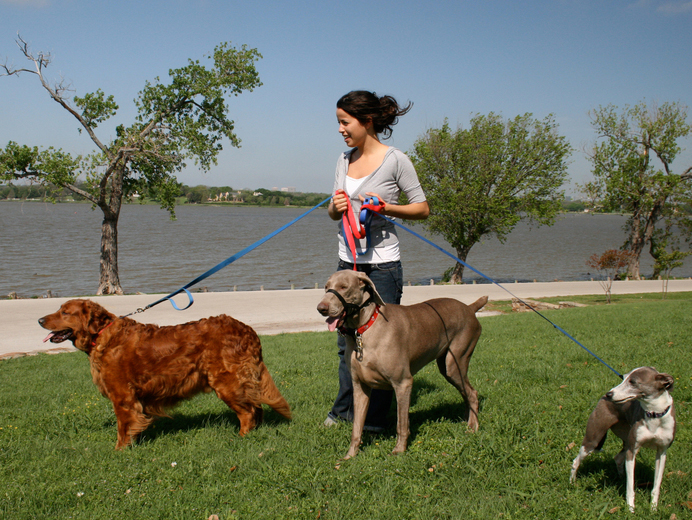 Opinion, dog walking summer jobs for teens Tell me